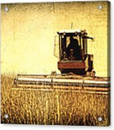 A Field For Harvest Acrylic Print by Lincoln Rogers
