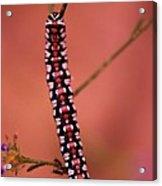 A Little Caterpillar Acrylic Print by Jeff Swan