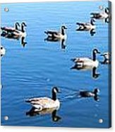 A Lot Of Geese Acrylic Print by Eric w Martin