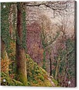 A Path In The Wood Acrylic Print by Edward Bentley
