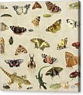 A Study Of Insects Acrylic Print by Jan Van Kessel
