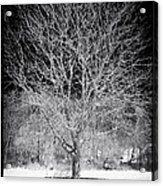 A Tree In The Snow Acrylic Print by John Rizzuto