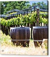 A Vineyard With Oak Barrels Acrylic Print by Susan  Schmitz