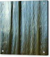A Walk In The Woods IIi Acrylic Print by Bob Retnauer