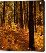 A Walk Through The Woods  Acrylic Print by Saija  Lehtonen