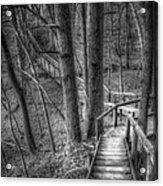A Walk Through The Woods Acrylic Print by Scott Norris