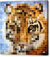 About 400 Sumatran Tigers Acrylic Print by Charlie Baird
