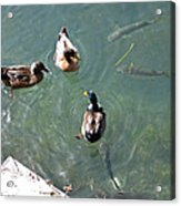 Above And Below Acrylic Print by Rod Jones