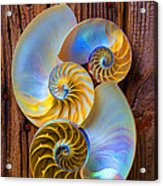 Abstract Chambered Nautilus Acrylic Print by Garry Gay