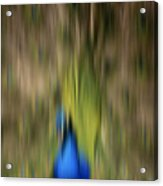 Abstract Moving Peacock  Acrylic Print by Georgeta Blanaru