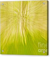 Abstract Nature  Acrylic Print by Gry Thunes