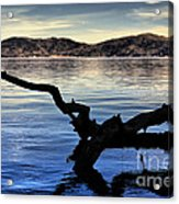 Adrift Reflection Acrylic Print by Cheryl Young