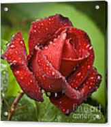 After The Rain Acrylic Print by Frank Tschakert