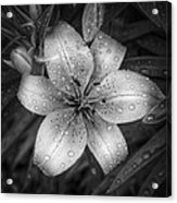 After The Rain Acrylic Print by Scott Norris