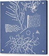 Algae Acrylic Print by Aged Pixel