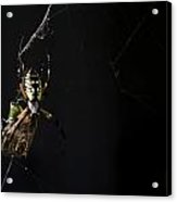 Along Came A Spider Acrylic Print by Heather Applegate