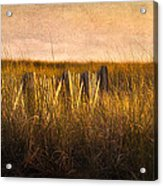 Along The Fence Acrylic Print by Bill  Wakeley