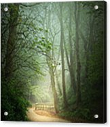 Along The Path Acrylic Print by Svetlana Sewell