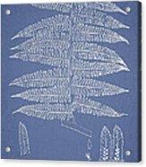 Alsophila Ornata Acrylic Print by Aged Pixel
