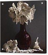 Amaryllis  Acrylic Print by Larry Preston