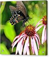Amazing Butterfly Acrylic Print by Marty Koch