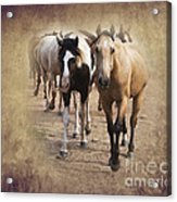 American Quarter Horse Herd Acrylic Print by Betty LaRue
