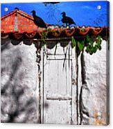 Amigos Negros Acrylic Print by Skip Hunt