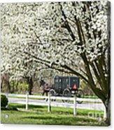 Amish Buggy Fowering Tree Acrylic Print by David Arment