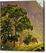 Among The Mountains And Tea Plantations. Nuwara Eliya. Sri Lanka Acrylic Print by Jenny Rainbow