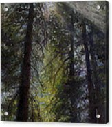 An Enchanted Forest Acrylic Print by Mary Giacomini