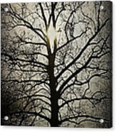 Ancient Tree Acrylic Print by Terry Rowe
