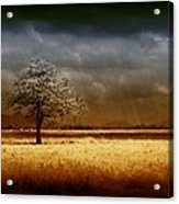 And The Rains Came Acrylic Print by Holly Kempe