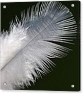 Angel Feather Acrylic Print by Carol Lynch