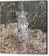 Angel In The Woods Acrylic Print by Marisa Horn