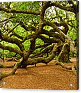 Angel Oak Tree Branches Acrylic Print by Louis Dallara