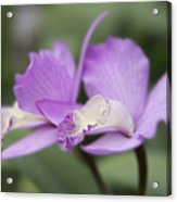 Angels Treasure Hawaii Orchid Acrylic Print by Sharon Mau