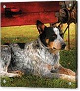 Animal - Dog - Always Faithful Acrylic Print by Mike Savad