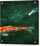 Animal - Fish - Koi - Another Fish Story Acrylic Print by Mike Savad