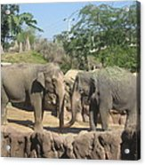 Animal Park - Busch Gardens Tampa - 01131 Acrylic Print by DC Photographer
