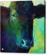 animals - cows- Black Cow Acrylic Print by Ann Powell