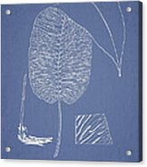 Anisogonium Cordifolium Acrylic Print by Aged Pixel