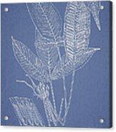 Anisogonium Lineolatum Acrylic Print by Aged Pixel