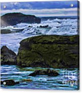 Ano Nuevo Seagull Acrylic Print by Blake Richards