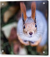 Anyting To Bite - Featured 3 Acrylic Print by Alexander Senin