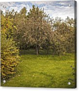 Apple Orchard Acrylic Print by Amanda And Christopher Elwell