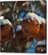 Apple Sorbet Acrylic Print by The Stone Age