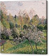 Apple Trees In Blossom Acrylic Print by Camille Pissarro