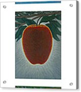 Apples Triptych 2 Acrylic Print by Don Young