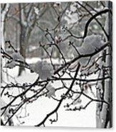 April Snow Acrylic Print by Kay Novy