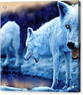 Arctic White Wolves Acrylic Print by Mal Bray